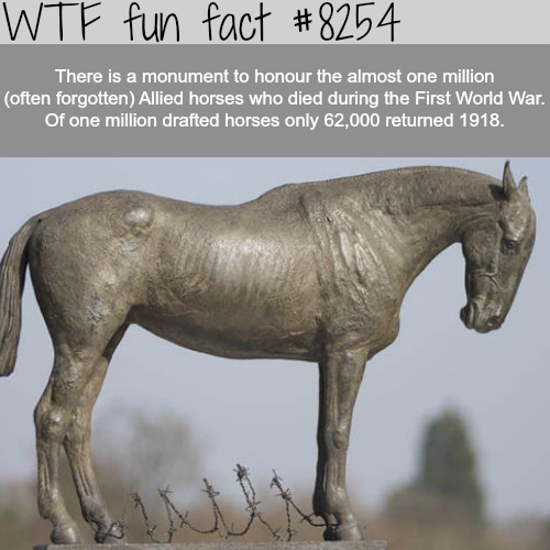 Monument to honor the forgotten Allied horses - WTF fun facts
