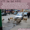 moscow street dogs are smarter than other dogs