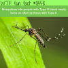 mosquitoes like type o blood type wtf fun facts