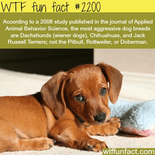 Most aggressive dogs -WTF fun facts