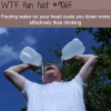 most effective way to cool down wtf fun facts