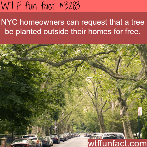 Most NYC homeowners don't know this -WTF fun facts