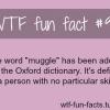 muggle definition