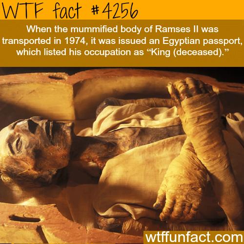 Mummified body of Ramses ll -  WTF fun facts