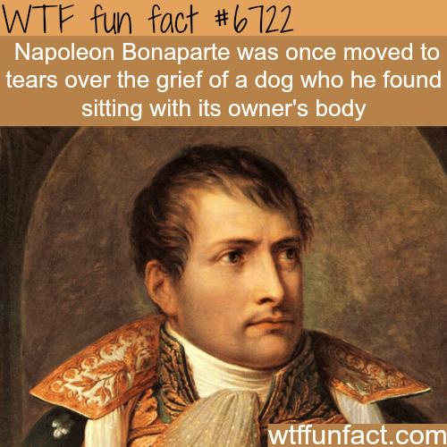 Napoleon Bonaparte - WTF fun fact