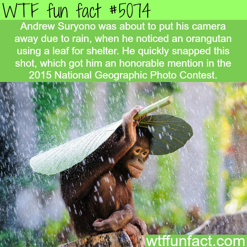 National Geographic top photos of 2015 - WTF fun facts