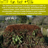 national trust wtf fun fact