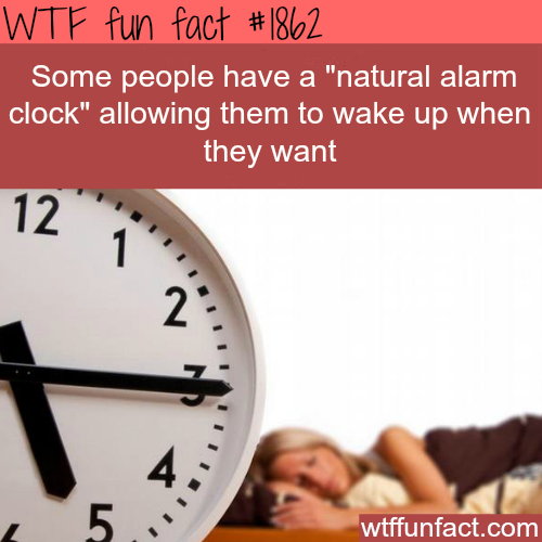 Natural alarm clock - WTF fun facts