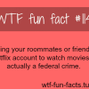 netflix legal movies facts more of