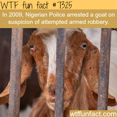 Nigerian Police arrested a goat - WTF fun fact