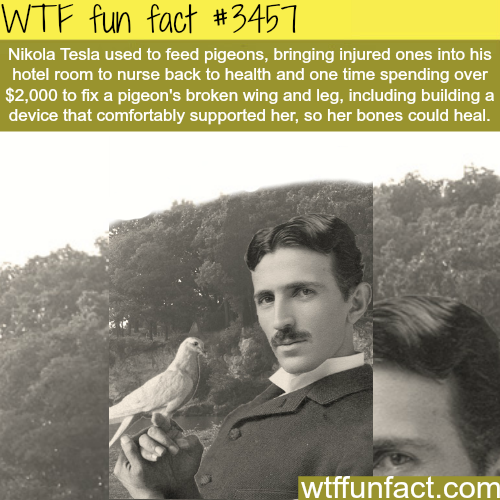 Nikola Tesla and pigeons -  WTF fun facts