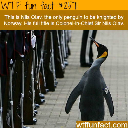 Nils Olav the penguin -WTF funfacts