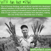 norman borlaug facts wtf fun facts
