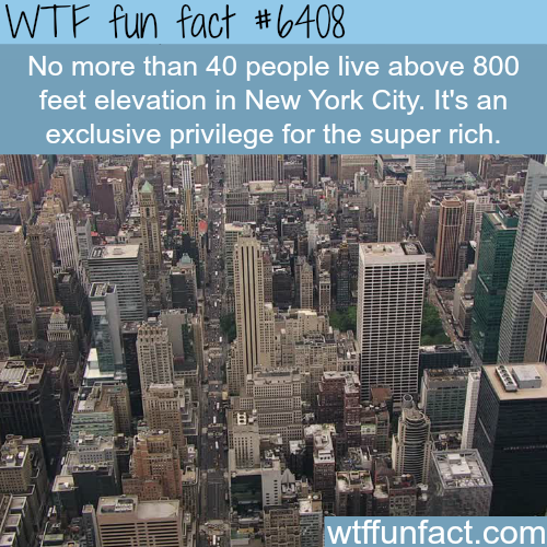 NYC - WTF fun facts