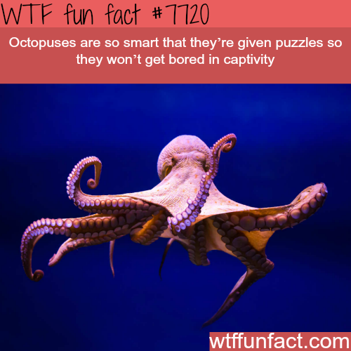 Octopuses - WTF fun facts