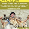 okunoshima island wtf fun facts