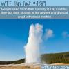 old faithful wtf fun facts