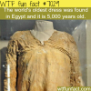 oldest dress in the world wtf fun facts