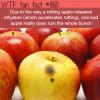 one bad apple wtf fun fact