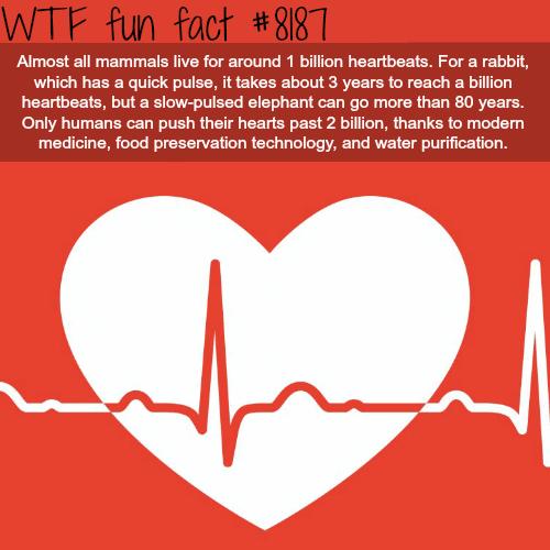 One Billion Heartbeats - WTF fun fact