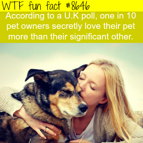 One out of ten pet owners love their pet more than their wife/husband - WTF fun facts
