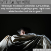 only half of your brain sleeps when you sleep in
