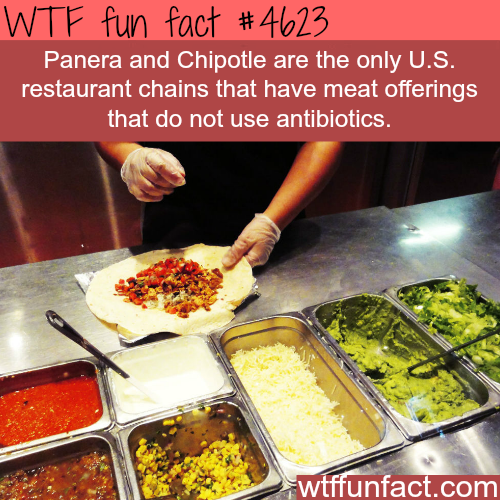 Only restaurant chains that don't use antibiotics in their meat - WTF fun facts