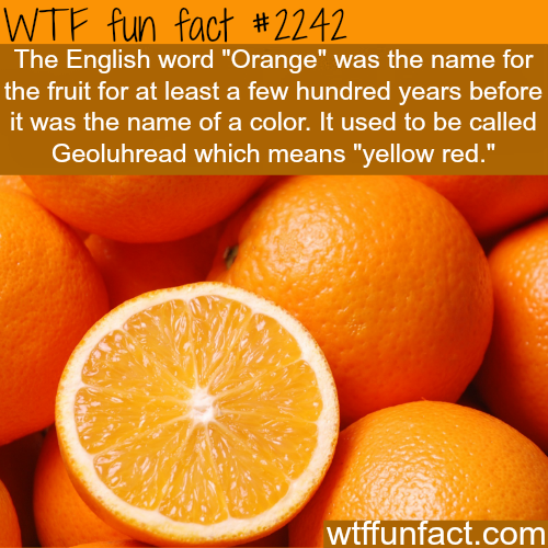 Orange fruit or color? - WTF fun facts