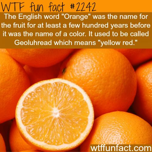 Orange fruit or color? -WTF fun facts