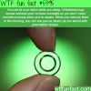 orthokeratology lenses wtf fun facts