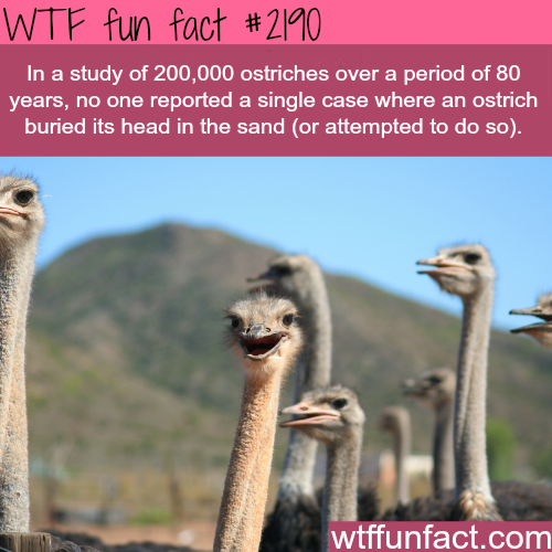 Ostriches facts: Myth busted - WTF fun facts
