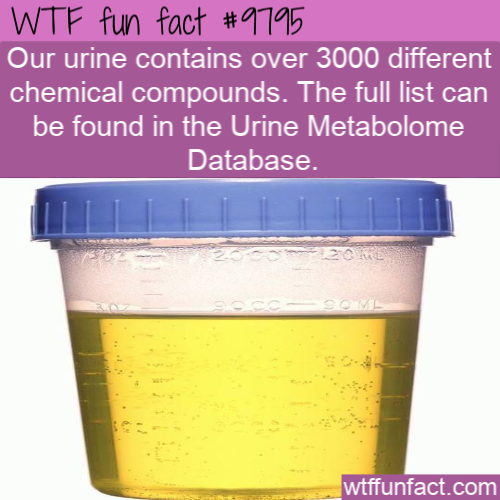 Our urine contains over 3000 different chemical compounds. The full list can be found in the Urine Metabolome Database.