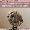 owl species facts