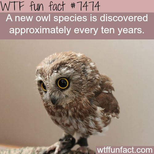 Owl species - FACTS