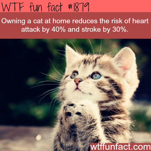 Owning a cat at home -WTF fun facts