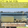 oyster water filtration wtf fun facts