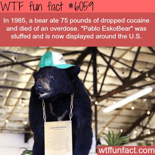 Pablo EskoBear - WTF fun facts