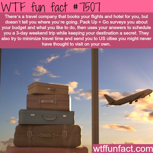 Pack Up + Go - WTF FUN FACTS