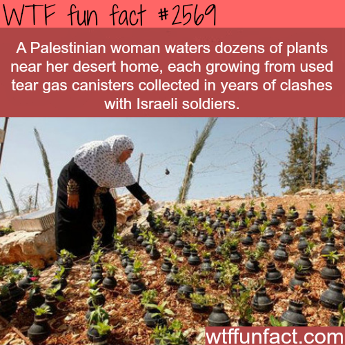 Palestinian woman waters plants in tear gas canisters - WTF fun facts