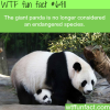 pandas are no longer endangered wtf fun facts