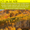 pando wtf fun facts