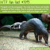 pangolin and its pangopup
