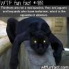 panthers vs jaguars