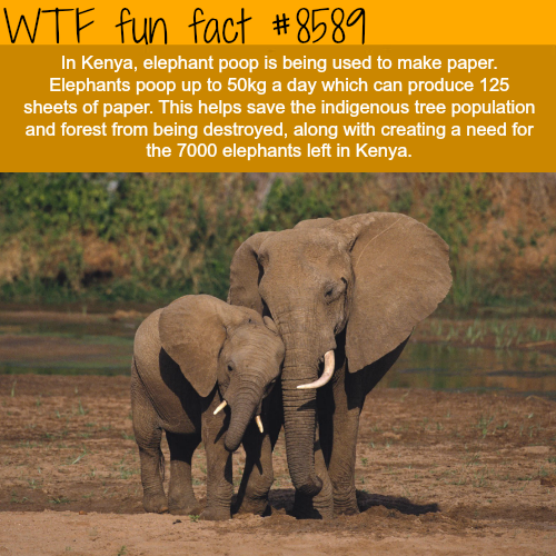 Paper is being made out of elephant poop - WTF fun facts