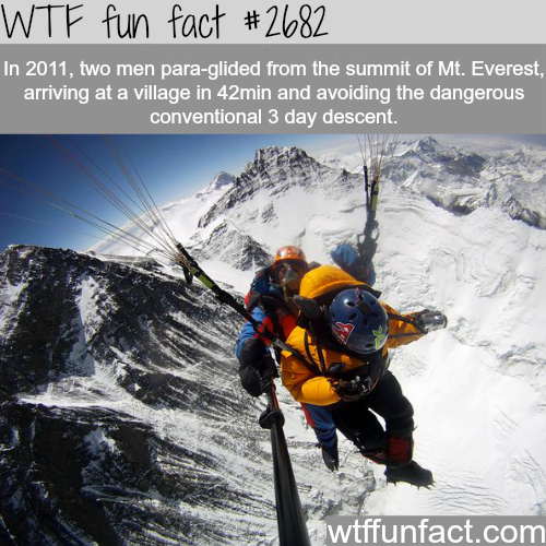 Para-gliding from Mt. Everest - WTF fun facts