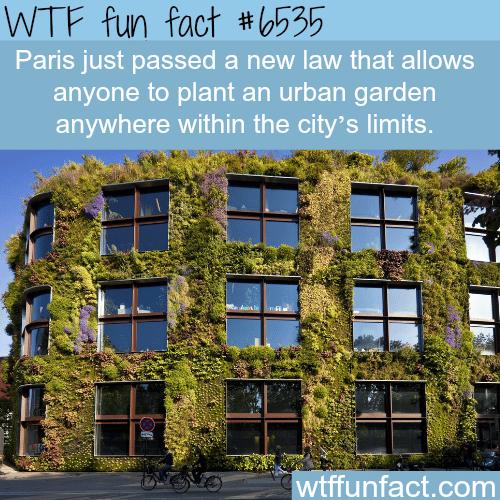 Paris' urban gardens