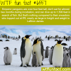 penguins taller than lebron james wtf fun facts