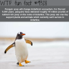 penguins wtf fun facts