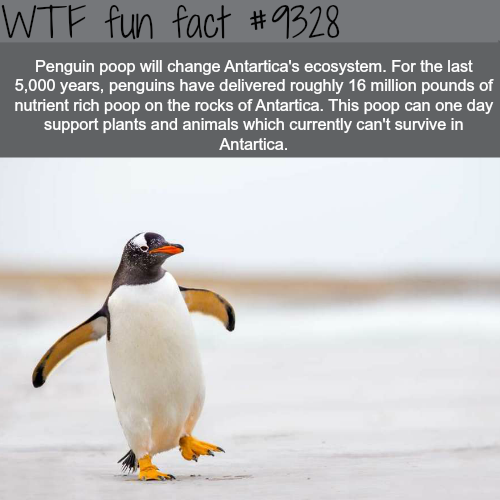 Penguins - WTF FUN FACTS