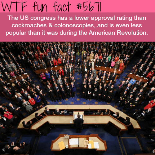 People like cockroaches more than politicians - WTF fun fact